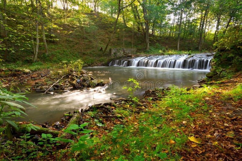小河级联在波兰森林里 库存照片