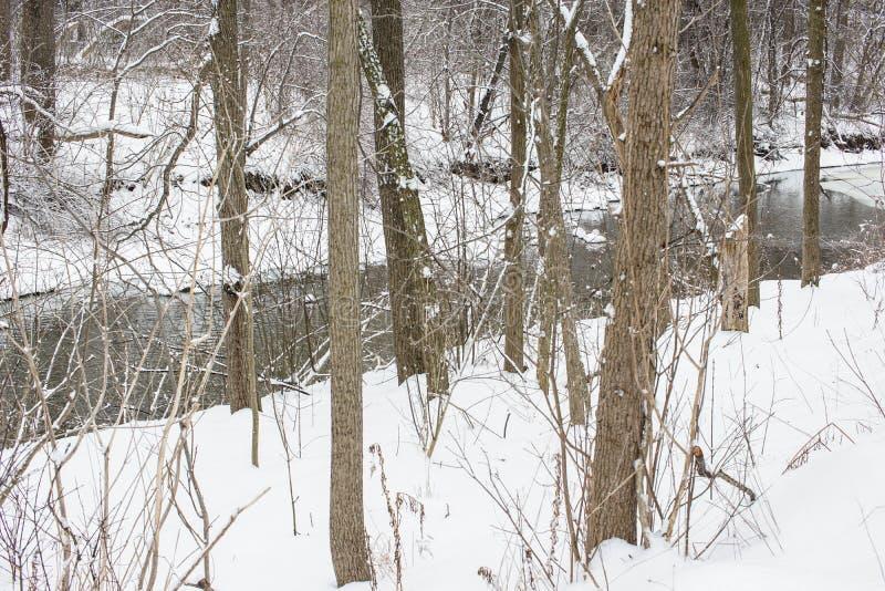 小河赛跑通过积雪的树木繁茂的公园 库存照片