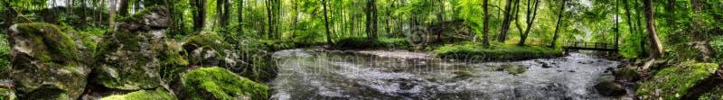 小河通过森林 库存照片