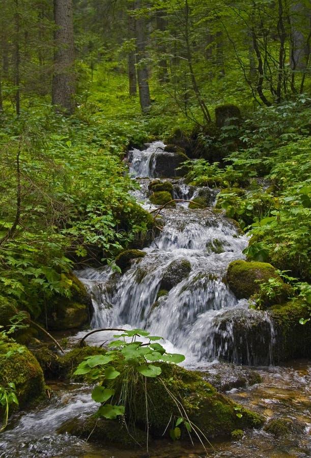 Download 小河 库存图片. 图片 包括有 生活, 本质, 瀑布, 秋天, 小河, 森林, 绿色, 夏天, 石头, runnel - 3674649