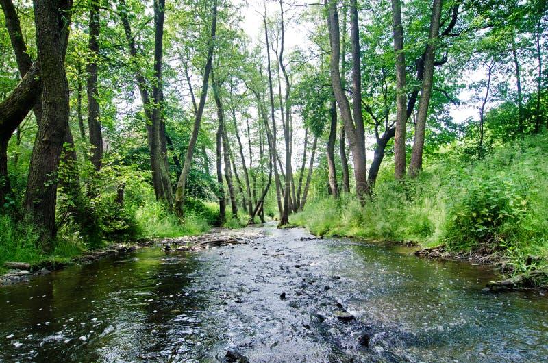 Download 小河 库存照片. 图片 包括有 的treadled, 共和国, 捷克语, 绿色, 石头, 夏天, 森林, 小河 - 62534532