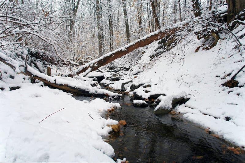 小河dc公园岩石华盛顿冬天 免版税库存照片