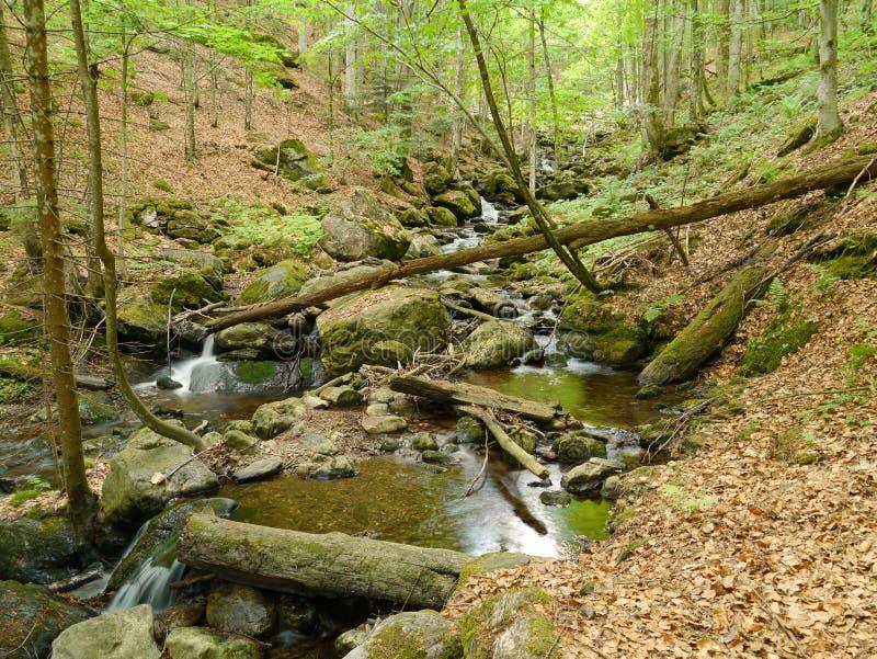 小河Höllbachgspreng,树木繁茂的岩石断层块 库存照片