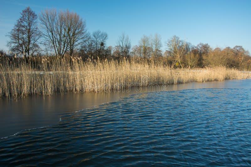 小波浪和稀薄的冰在一个镇静湖 树和芦苇在岸和清楚的天空 库存图片