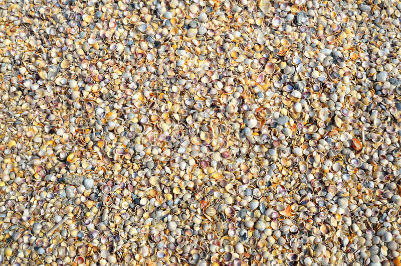 小海壳纹理在海岸的 图库摄影