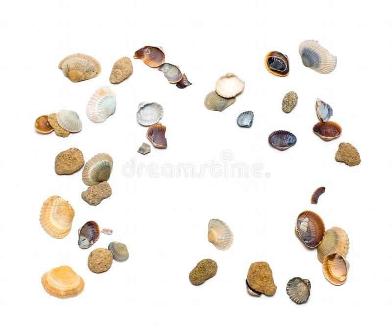 小海扇壳的海洋 免版税库存照片