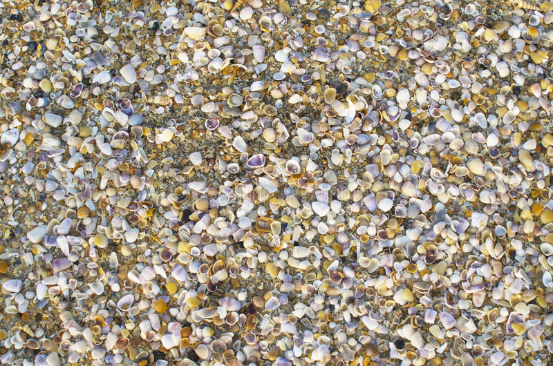 小海海扇壳背景  库存照片