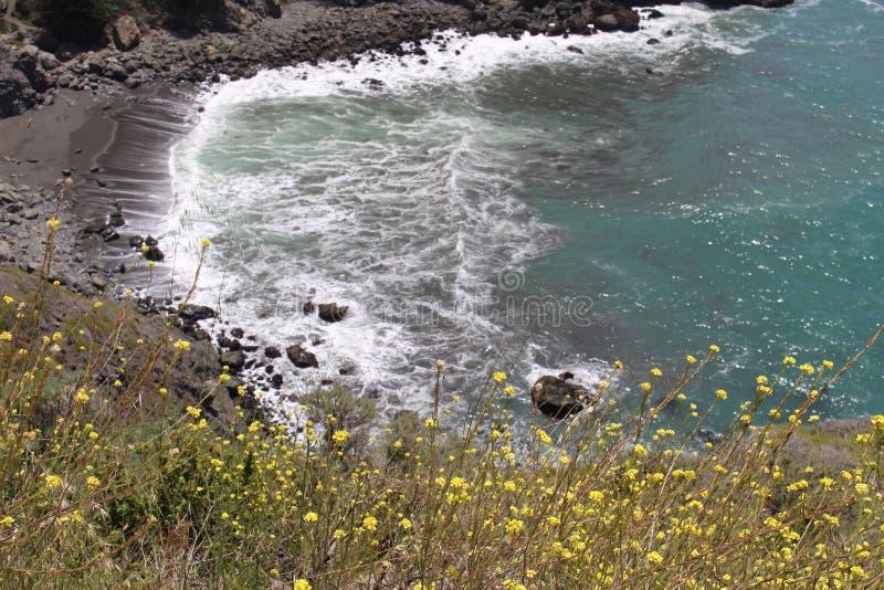 小海湾看法从路旁的与在前景的黄色野花 免版税库存照片
