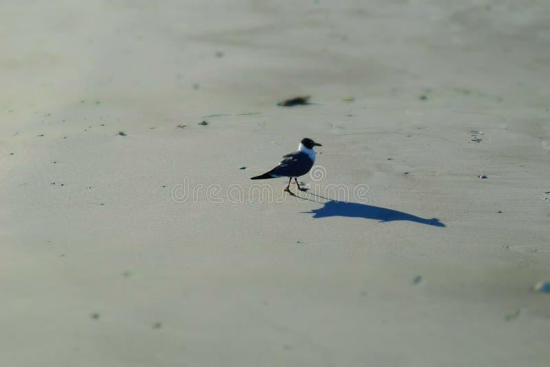 小海滩鸟 库存照片