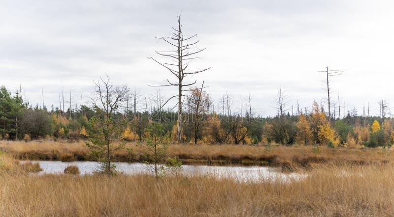 小湖在德伦特省荷兰 库存照片