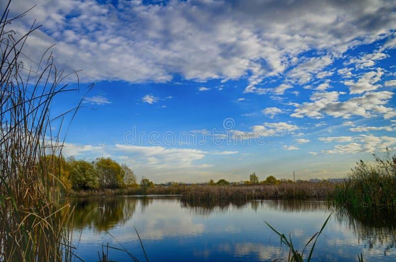 小湖在Vacaresti自然公园,布加勒斯特,罗马尼亚 图库摄影