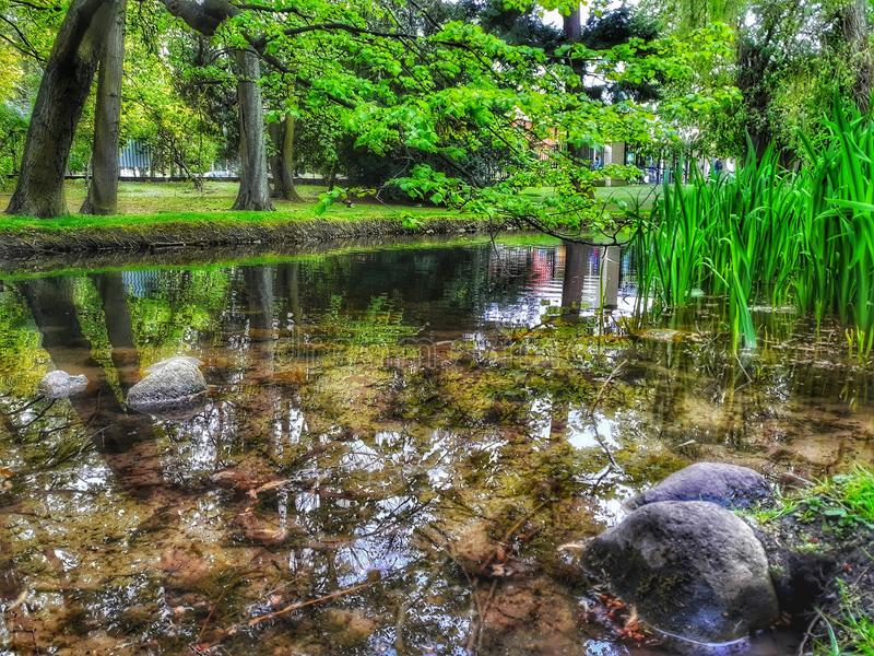 小溪边夏日美丽的公园 图库摄影