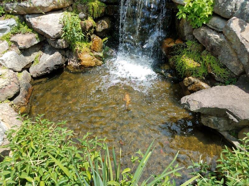 小瀑布和岩石和大鱼 库存图片