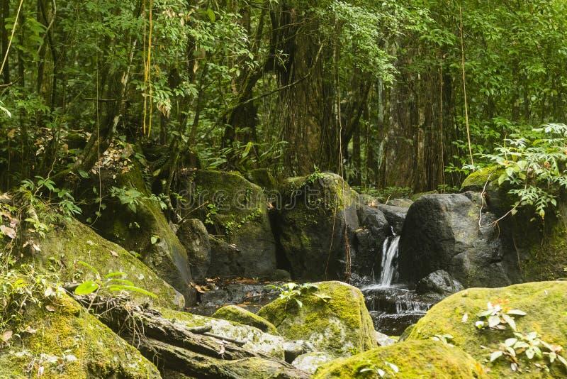小瀑布在密林 免版税库存照片