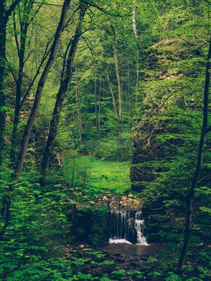 小瀑布在森林里,小河在森林里 库存图片