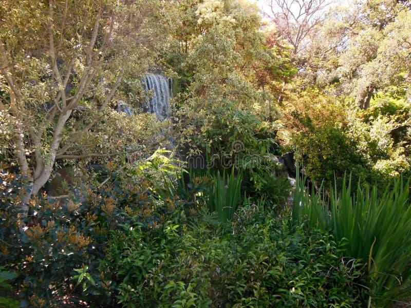 小瀑布在森林 库存照片