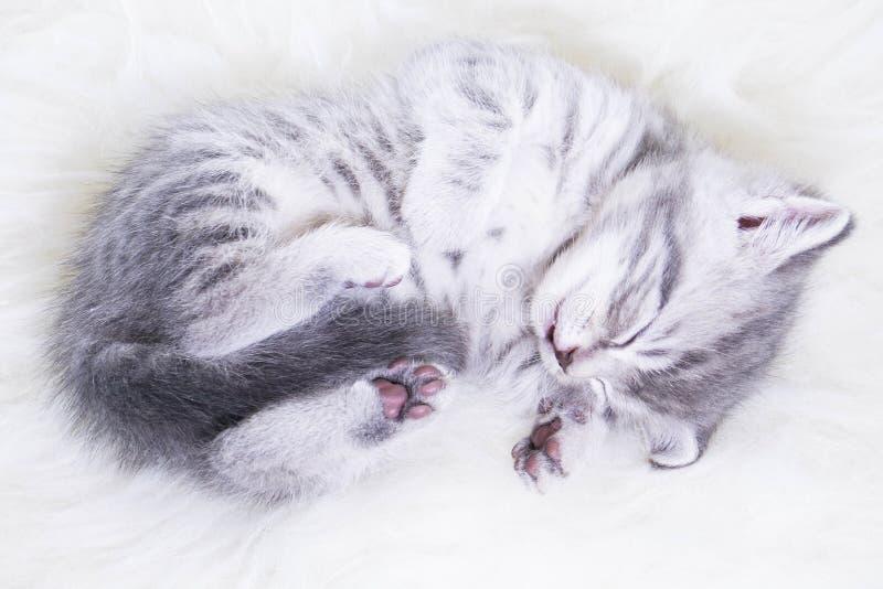 小灰色镶边小猫睡觉的婴孩 库存照片