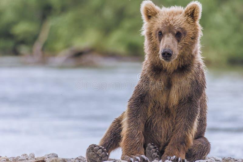 小熊 免版税图库摄影
