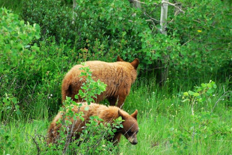 小熊 免版税库存图片