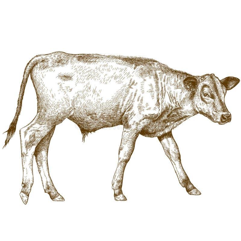 小牛的板刻例证 向量例证