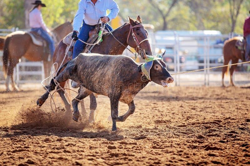 小牛绕绳在圈地 库存照片