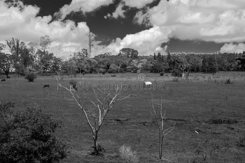 小牧场地 免版税库存照片