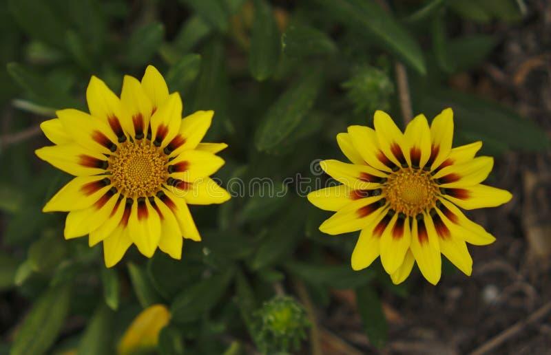 小狂放的黄色花 免版税库存图片