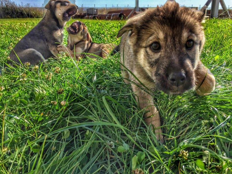 小狗使用 图库摄影