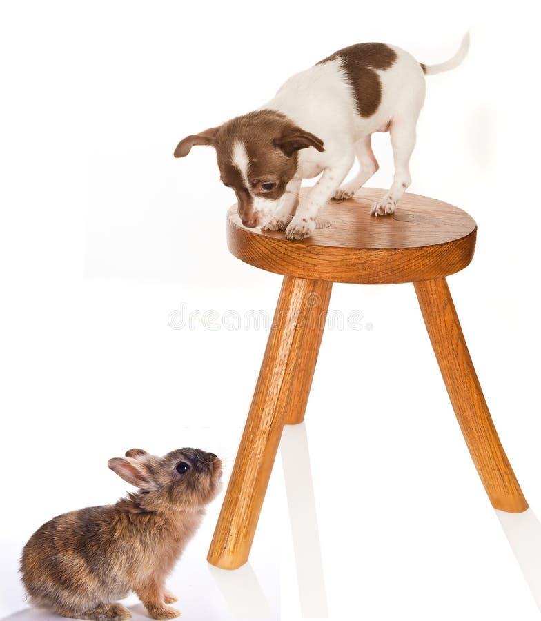 小狗兔子 免版税库存图片