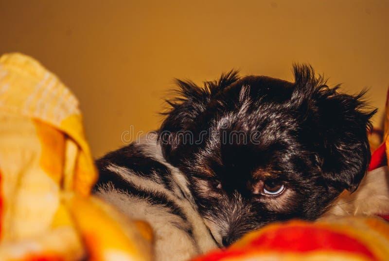 小狗北美野牛我的狗爱狗 免版税库存照片