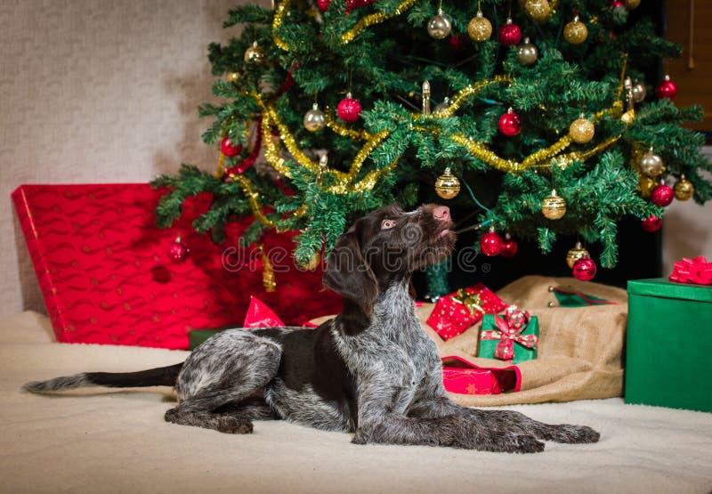 小狗和圣诞树 免版税图库摄影