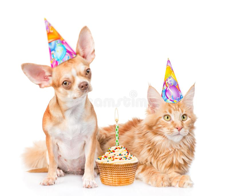 小狗和小猫在生日帽子有蛋糕的 查出在白色 免版税图库摄影