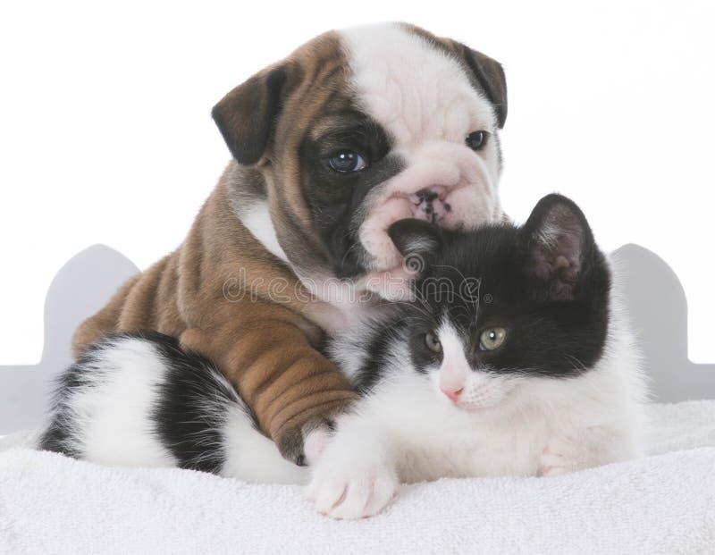 小狗和小猫爱 免版税库存照片