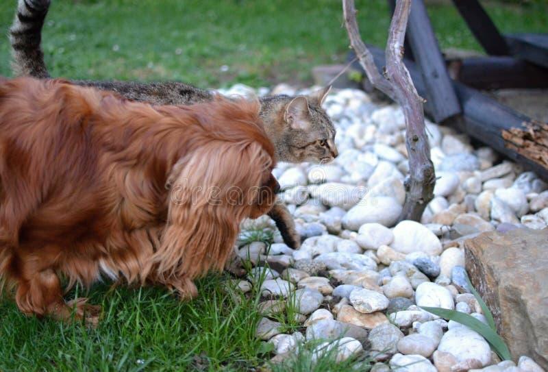 小狗和平纹小猫一起演奏朋友 免版税库存照片
