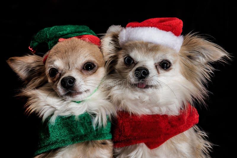 小狗圣诞派对 免版税库存照片