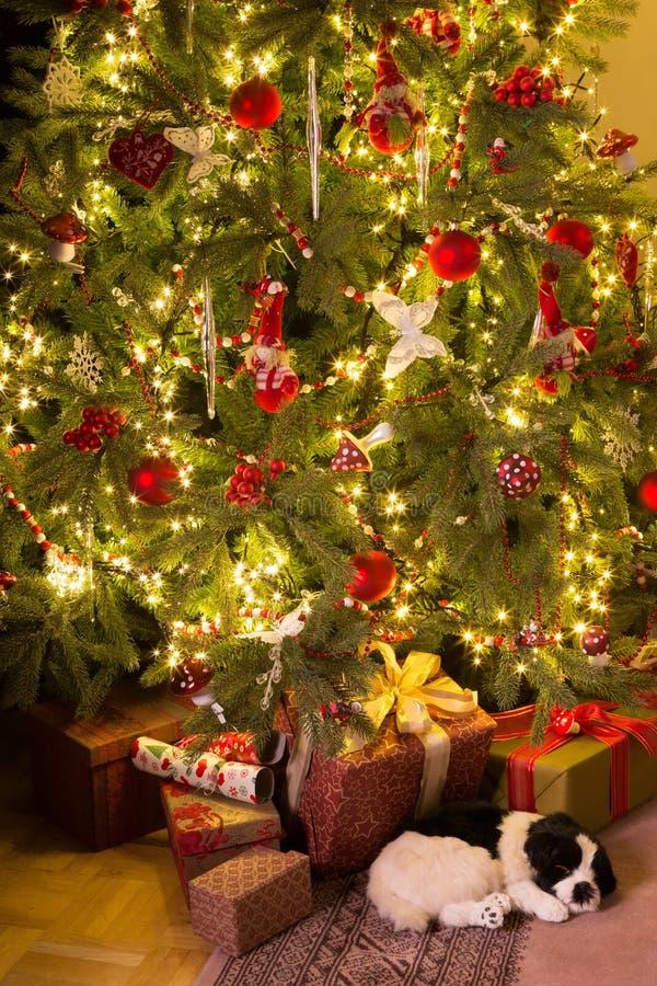 小狗在圣诞树下 免版税库存照片