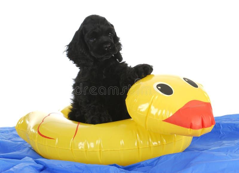 小狗在水中 免版税库存照片