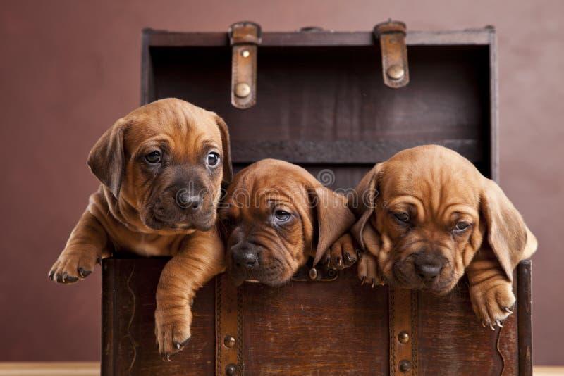 小狗愉快的年轻人 免版税库存照片