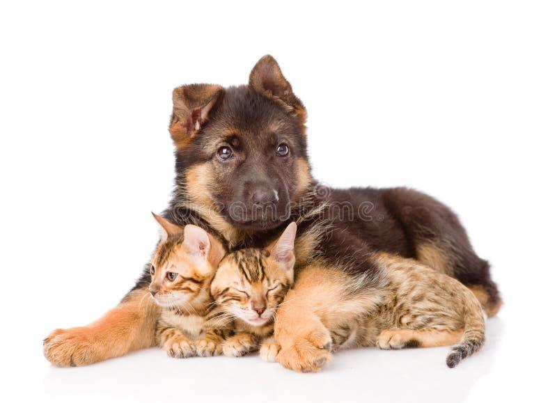 小狗拥抱小的小猫 背景查出的白色 库存图片