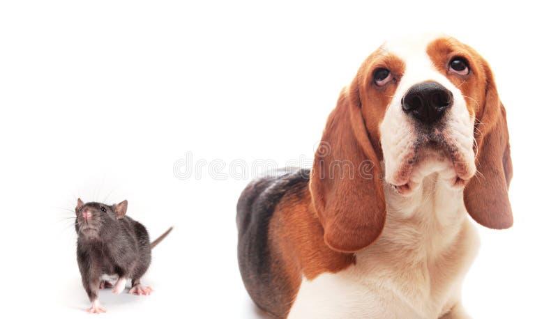 小狗汇率 库存照片