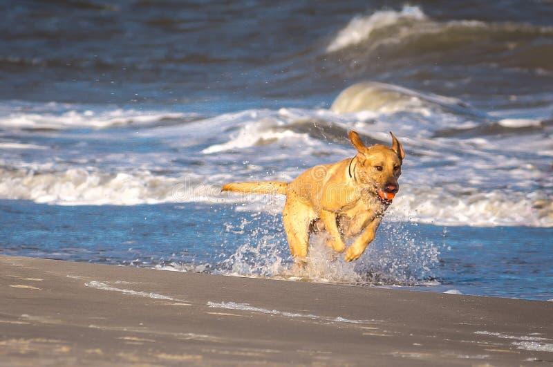 小狗海滩 免版税库存图片