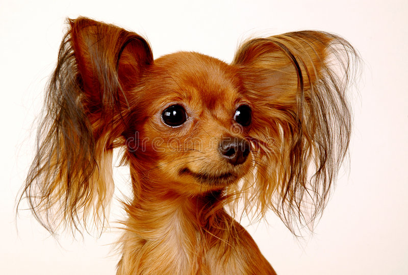 小狗玩具 库存图片