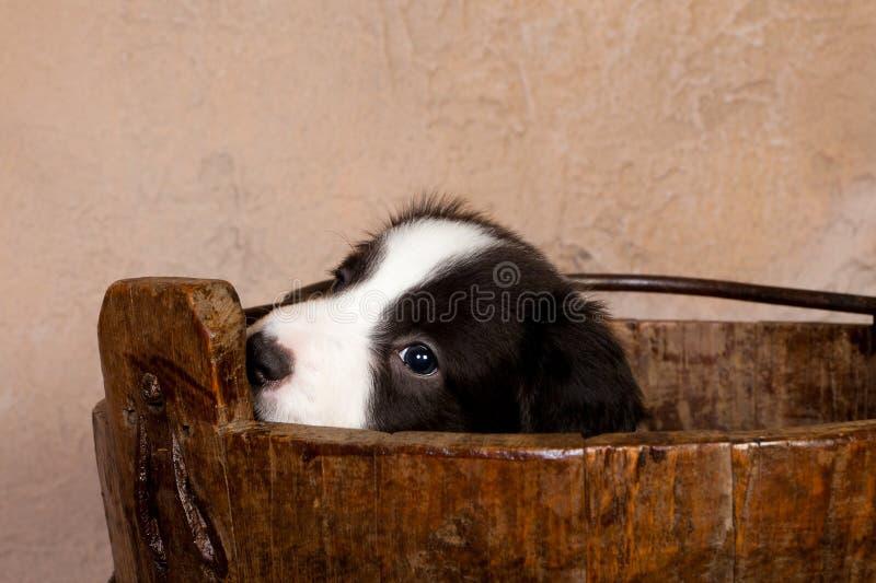 小狗甜点 库存图片