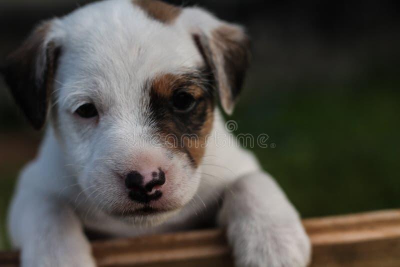 小狗眼睛 免版税库存图片