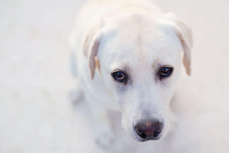 小狗眼睛 图库摄影