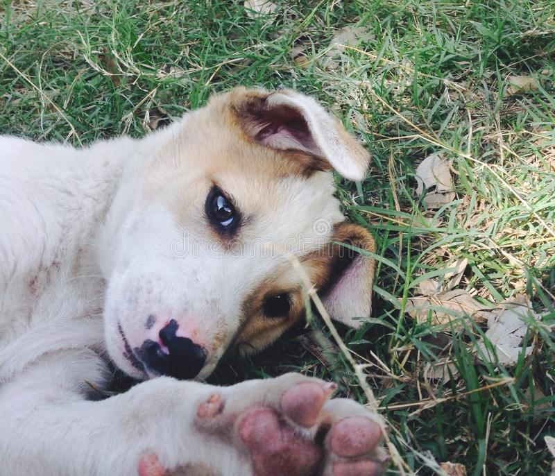 小狗眼睛 库存照片