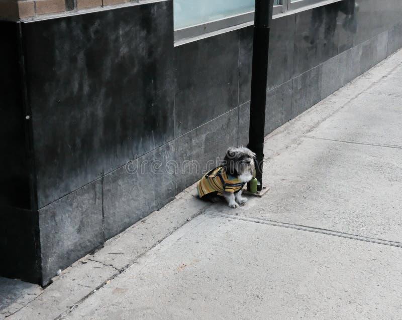 小狗被看见被栓对路灯柱由空的路面 库存照片
