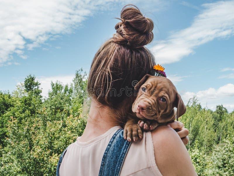 小狗,说谎在妇女的肩膀 库存图片