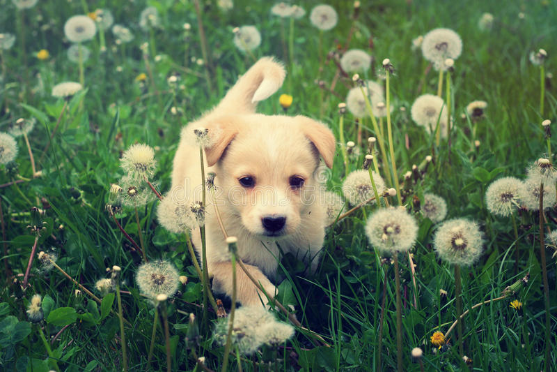 小狗 库存图片