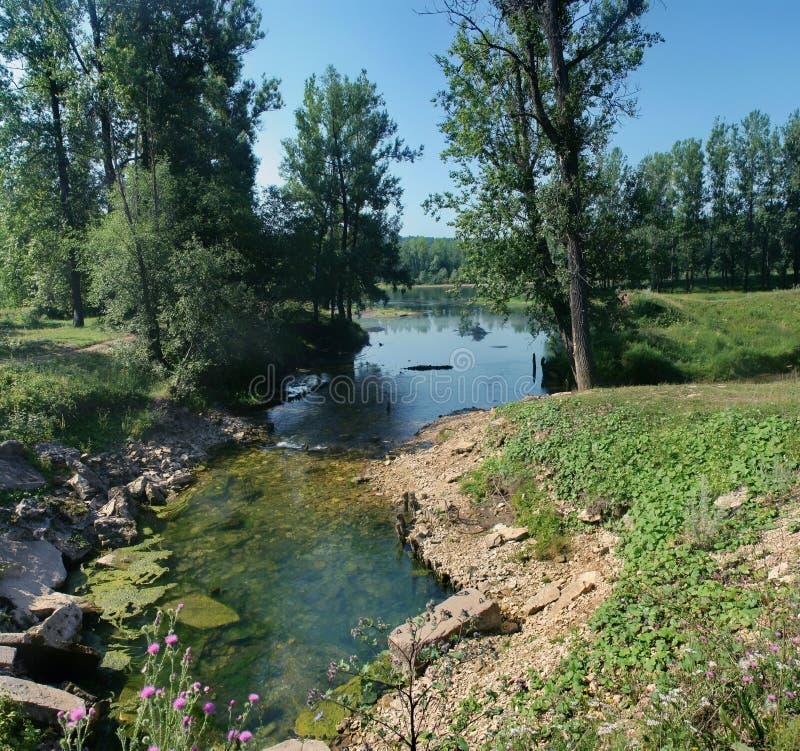小狭窄的小河用在森林地中的清楚的水 免版税库存图片